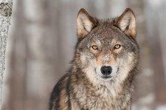 Risikokontrollierte Trendfolgemodelle: Investoren sind keine einsamen Wölfe