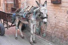 Die Retter der Welt: Von der Esel-Nachfrage in einer Risikogesellschaft