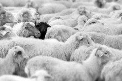 Wenig ausgeprägte Risikokultur: Besonders hohe Bußen für besonders schwarze Schafe