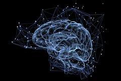 Erkenntnisse aus den Neurowissenschaften: Wie entscheiden wir unter Risiko?